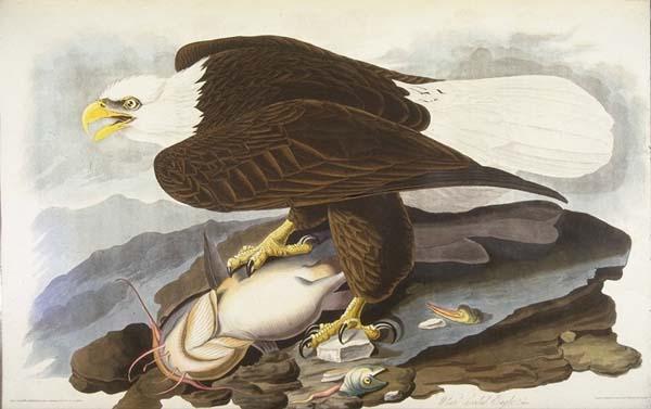 Najdroższa książka naświecie - Ptaki Ameryki
