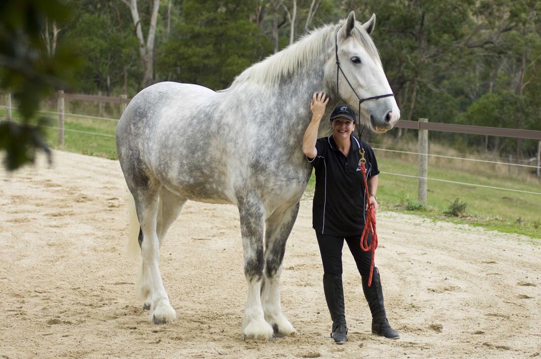 Największy koń naświecie