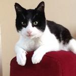 Kot ustanawia rekord Guinessa wnajgłośniejszym mruczeniu