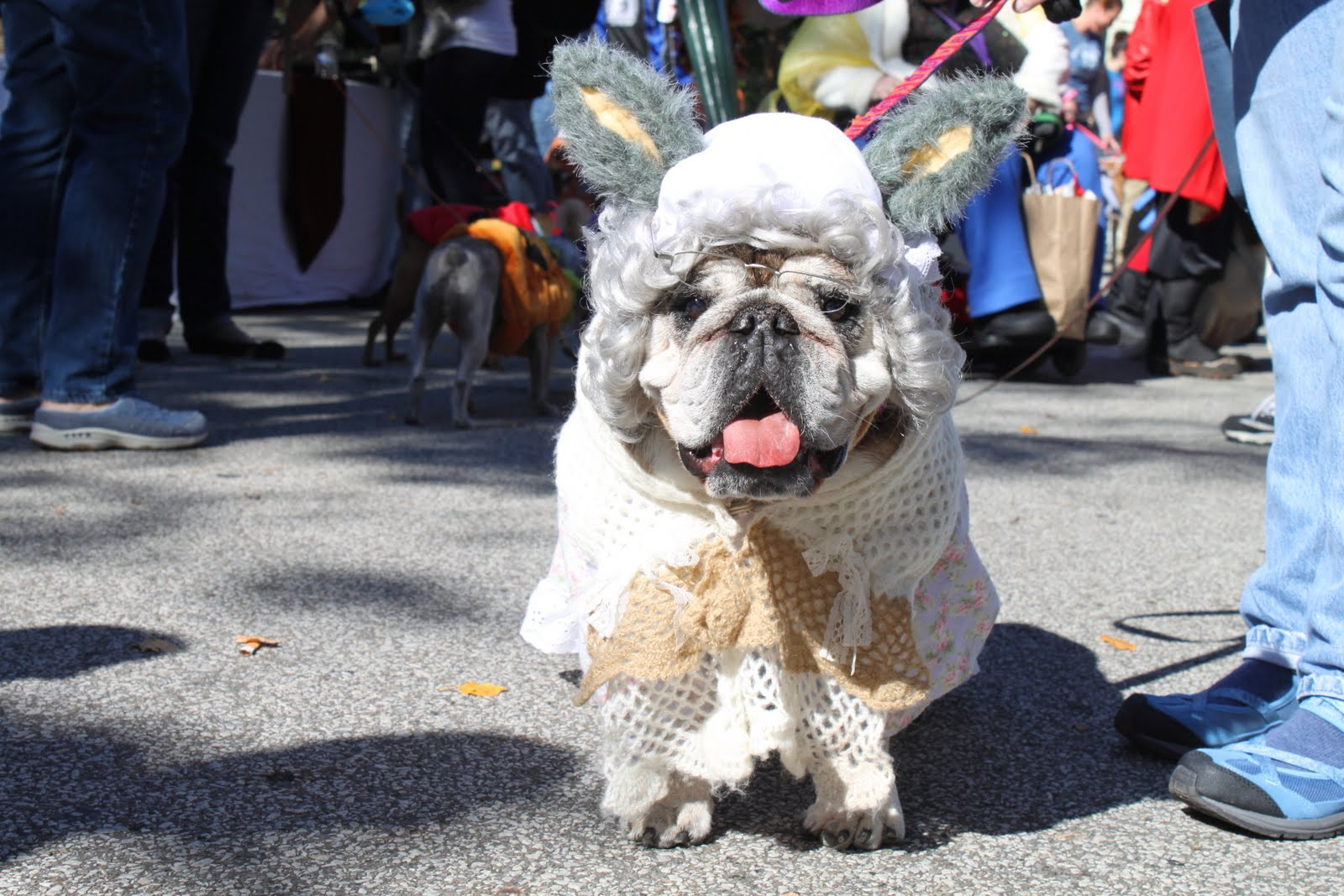 Największa parada psów naHallowen