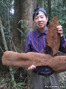 Największy grzyb świata