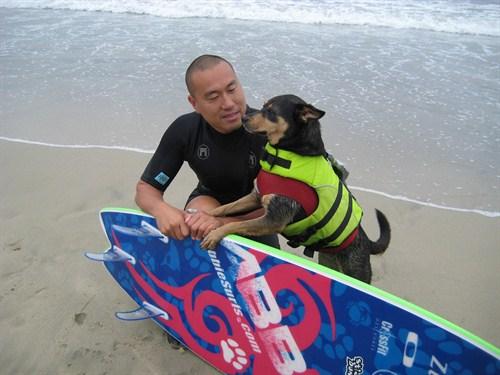 Surfujący pies pobija rekord Guinessa