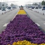 Rekord Guinessa nanajdłuższy dywan zkwiatów