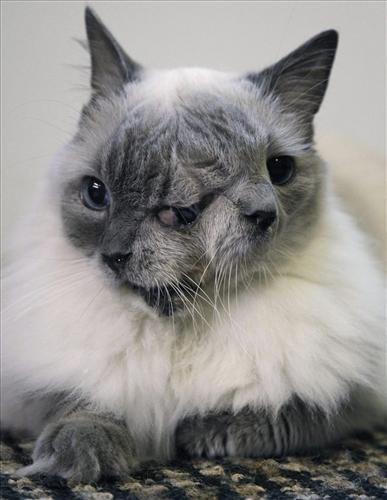 Kot zdwiema głowami