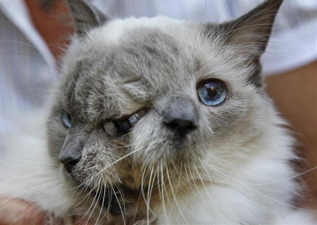 Kot zdwoma pyszczkami