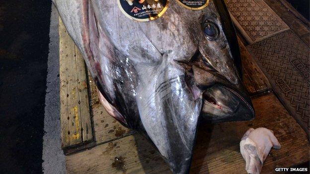 Najdroższy tuńczyk naświecie