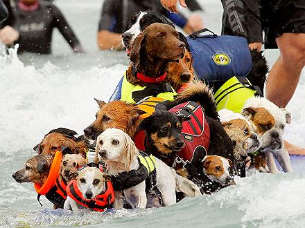 Surfing dla psów – rekord Guinessa