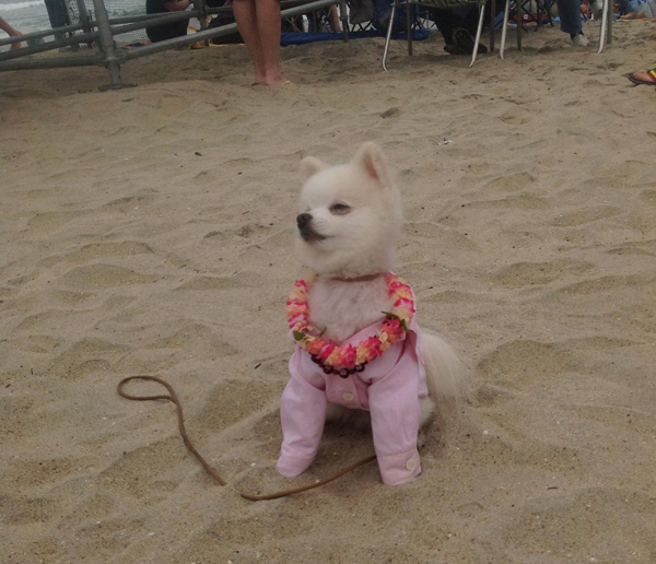 Surfing dla psów – rekord