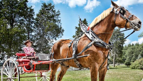Najwyższy koń naświecie