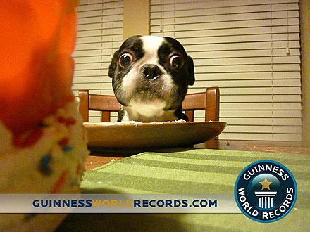 Pies onajwiększych oczach - rekord Guinessa
