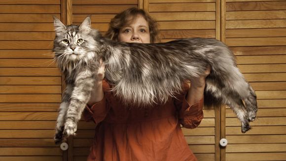 Najdłuższy kot świata przegrywa walkę zchorobą