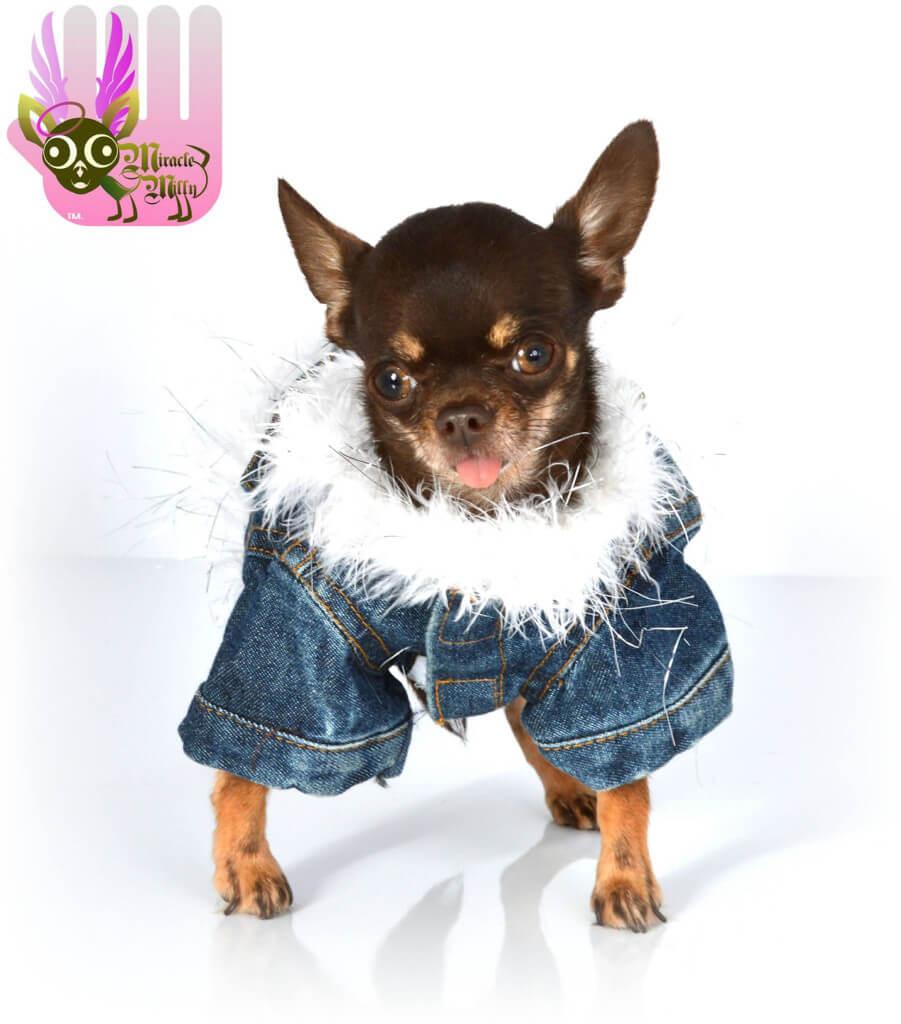 Najmniejszy pies naświecie