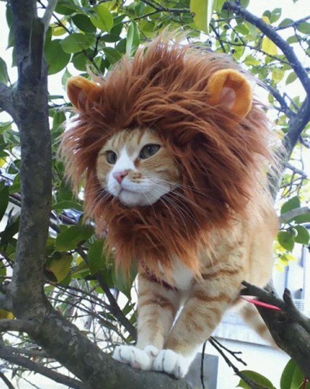 Halloweenowe kostiumy dla kotów