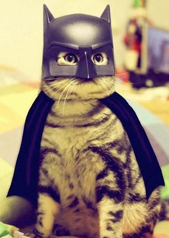 Halloweenowe stroje dla kotów
