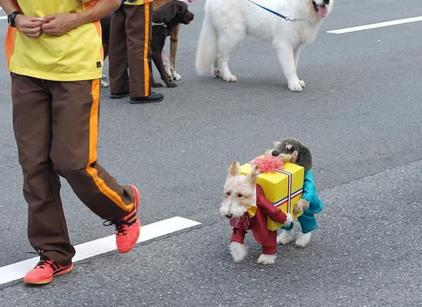 Halloweenowe stroje dla zwierząt