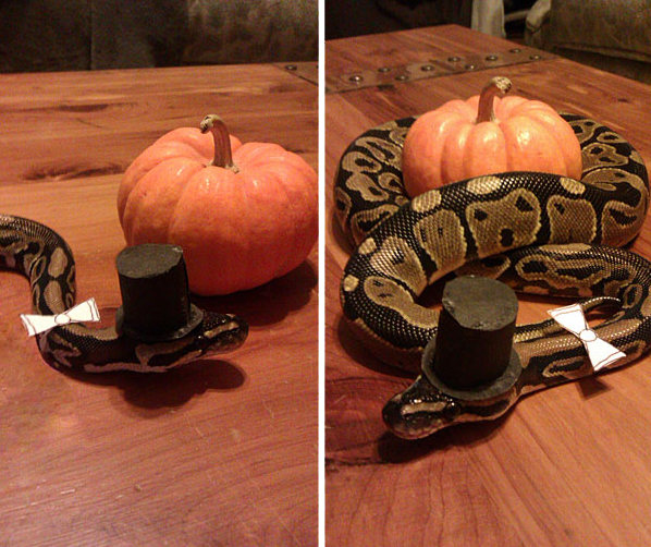 Halloweenowy kostium dla zwierząt