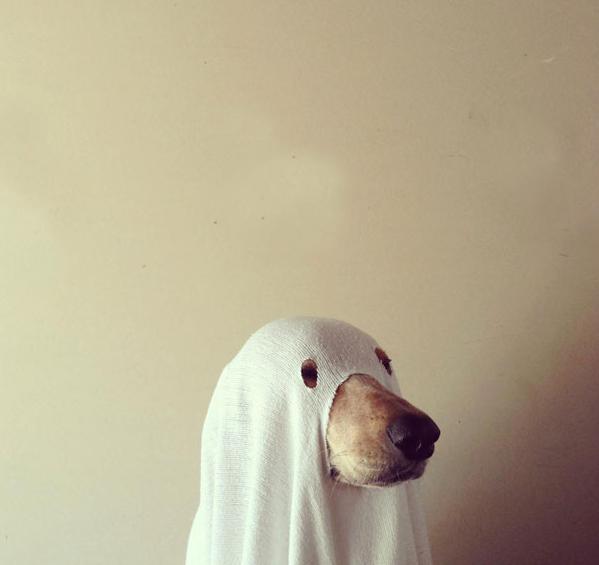Pies naHalloween