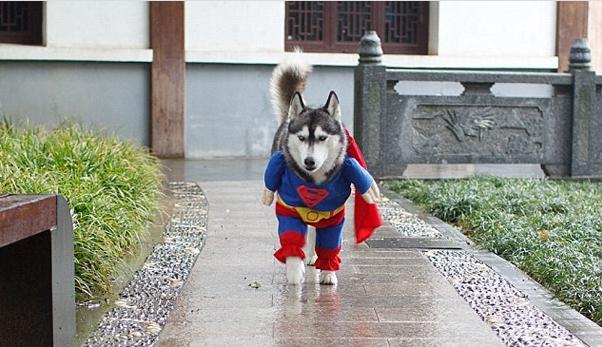 Przebranie dla psa - Halloween