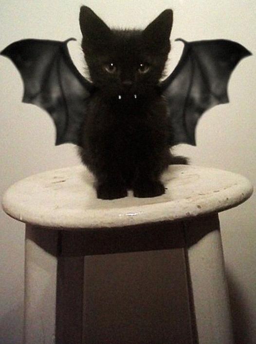 Przebranie dla zwierząt - Halloween