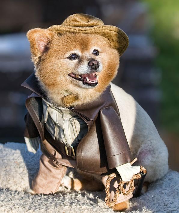 Strój dla psa - Halloween