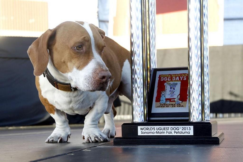 Walle - najbrzydszy pies naświecie