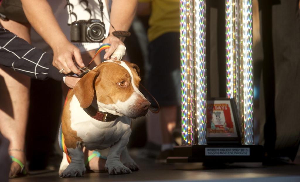 Walle - najbrzydszy pies świata
