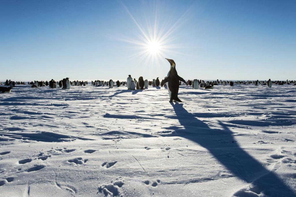 Największe morze świata - Morze Weddella