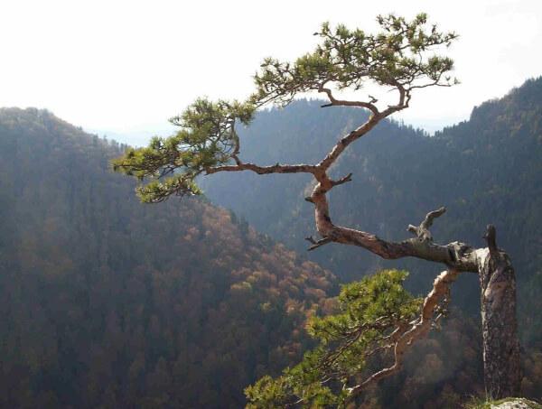 Najstarszy Park Narodowy wPolsce - Pieniny