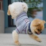 Jiff – najszybszy pies nadwóch łapach