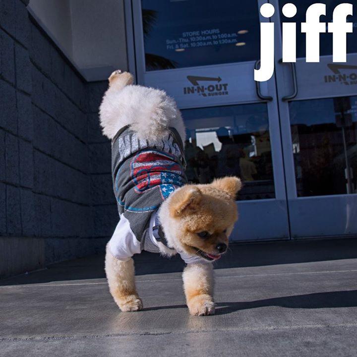 Jiff - najszybszy pies nadwóch łapach - rekord Guinessa