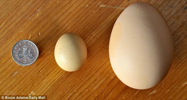 Największe jajko