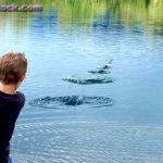 Puszczanie kaczek – rekord Guinessa