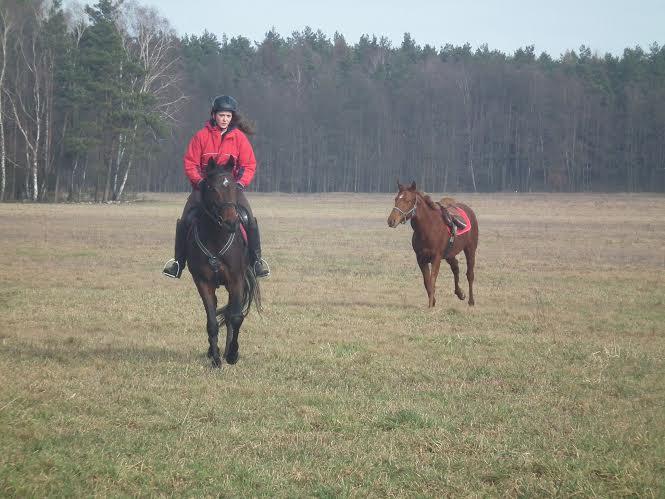 Mijaz - najszybszy koń wPolsce