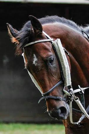 Najszybszy koń - rekord