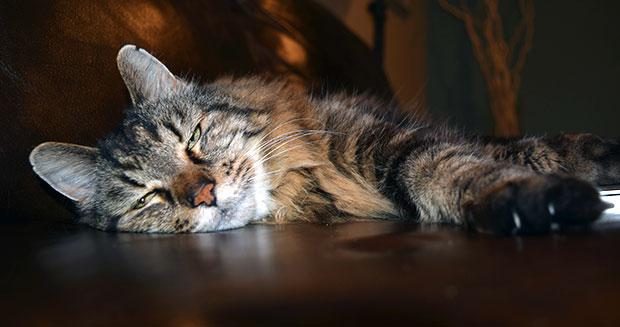 Najstarszy kot naświecie - rekord