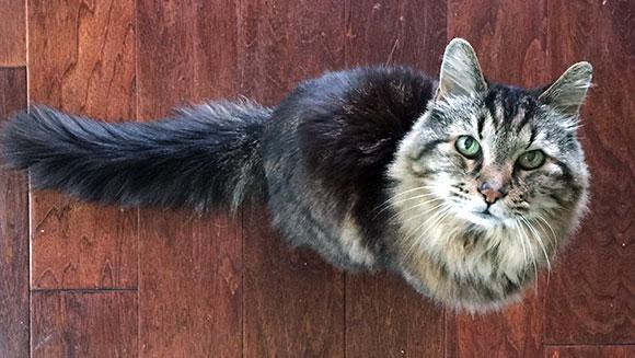 Najstarszy kot naświecie