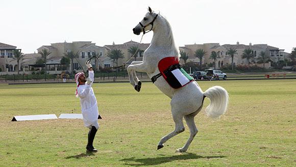 Koń chodzący nadwóch nogach