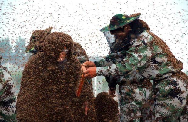Największy płaszcz zpszczół - rekord Guinessa