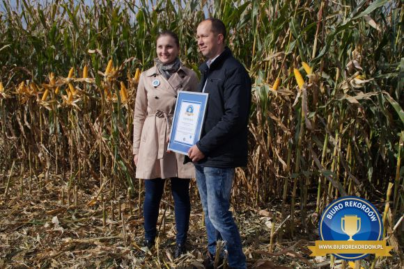 Plon kukurydzy naziarno - rekord