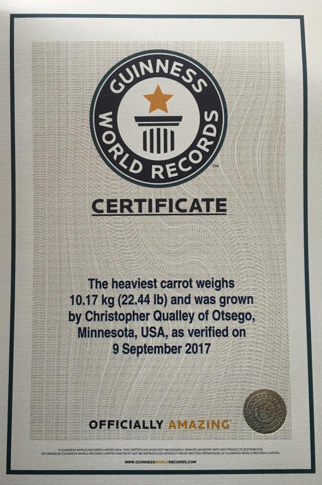 Rekord Guinnessa - największa marchew