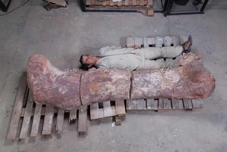 Patagotitan mayorum - największy