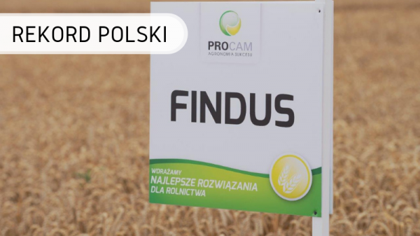 Polska-pszenica