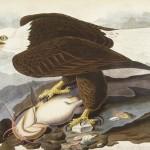 Najdroższa książka na świecie - Ptaki Ameryki