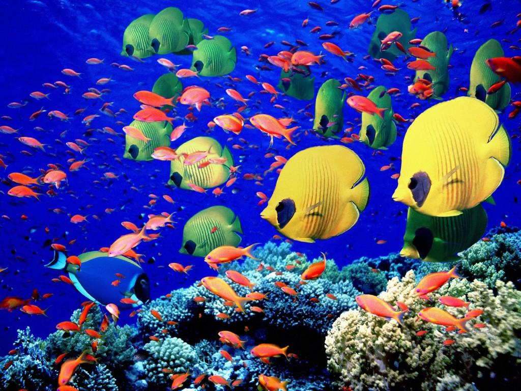 Najmniejsze morza na świecie