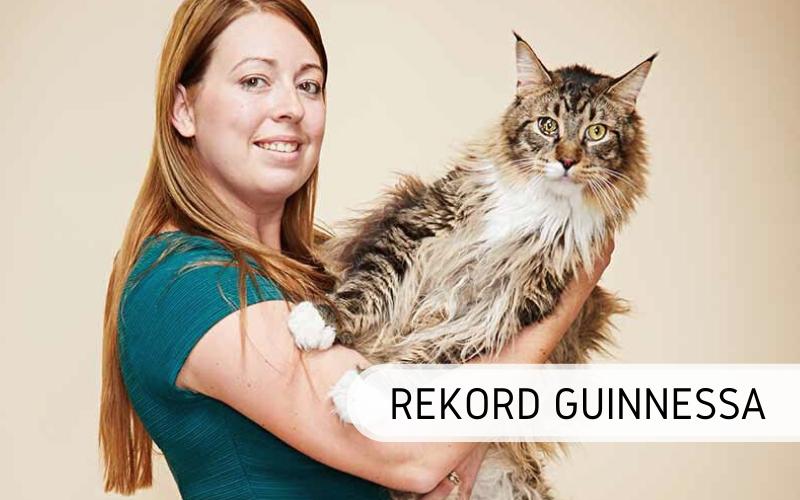 Rekord Guinnessa - najdłuższy kot świata
