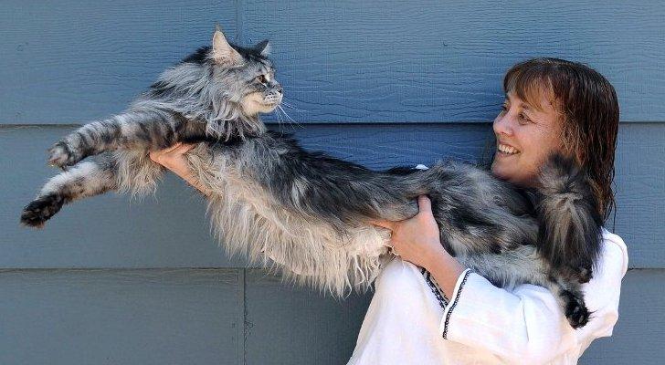 Najdłuższy kot naświecie