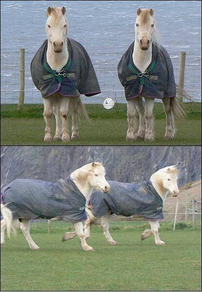 Najstarsze konie bliźnięta