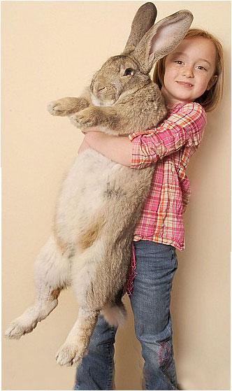 Największy królik na świecie