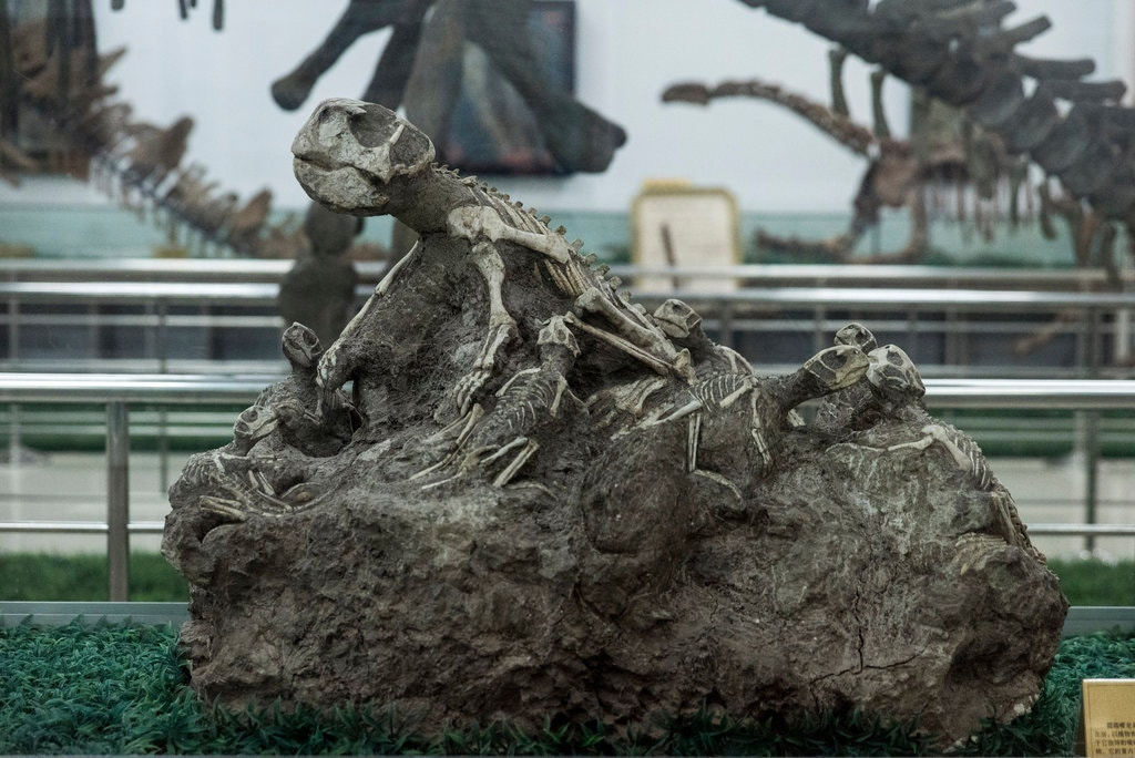 muzeum dinozaurów - najwieksze naświecie