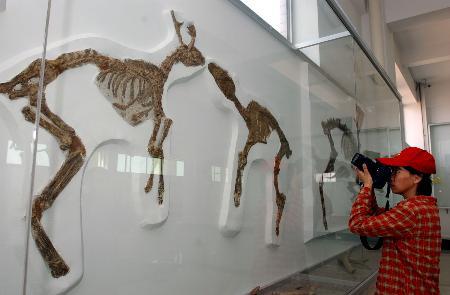 Muzeum dinozaurów